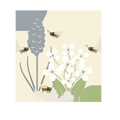 Pollen und Nektar sammeln