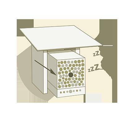 Bienen im Winterschlaf
