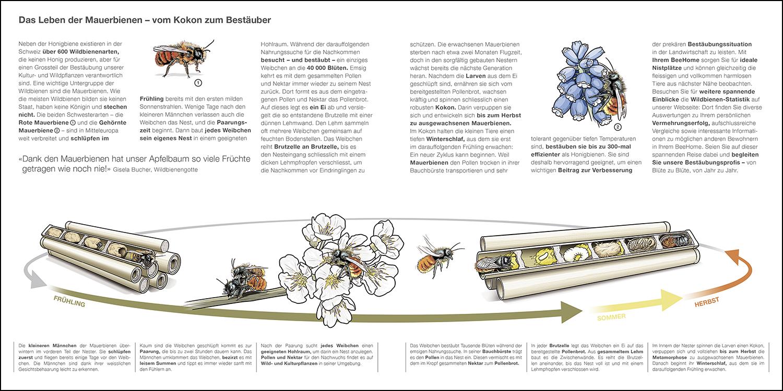 Biologie Flyer Innenseite