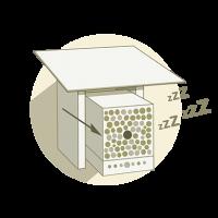 Wildbiene und Partner